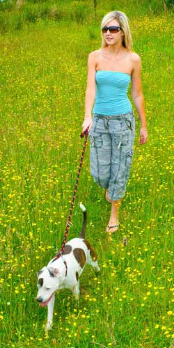 dog-walking-holiday