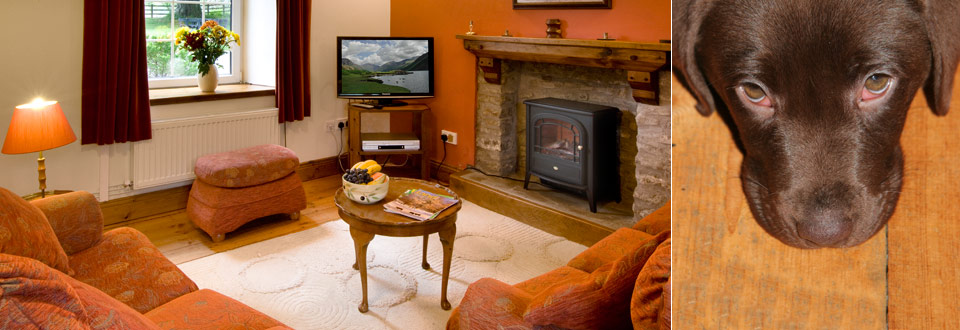 Ty Cerbyd Pet Friendly Self Catering Cottage